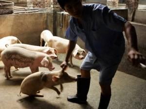 Роспотребнадзор назвал симптомы свиного гриппа
