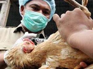 На Суматре ребенок погиб от птичьего гриппа