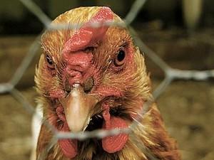 В Алуште пройдет семинар-тренинг по вопросам противодействия птичьему гриппу