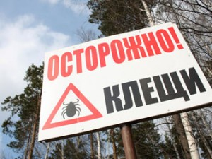 Москвичи завозят в столицу с клещами болезнь Лайма