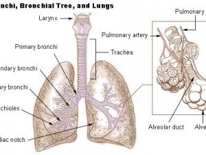 Бессимптомный гастроэзофагеальный рефлюкс не является причиной плохого контроля бронхиальной астмы