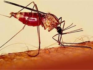 В Свердловской области начался сезон возможной передачи местной малярии