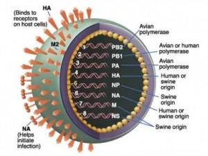 Пластырь от гриппа – нанопрививка