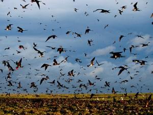 Защита от птичьего гриппа