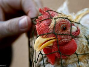 В Баку завершает работу международный семинар, посвященный профилактике «птичьего гриппа»