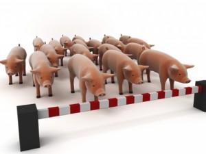 В Беларуси опять ждут свиной грипп
