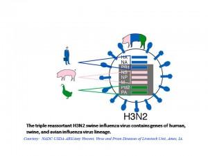 Новый грипп объединил три вируса