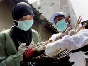 В Египте 11-летняя девочка скончалась от гриппа H5N1