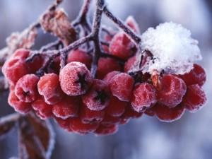 Почему зимой мы болеем?
