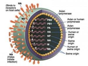Аптечные организации Самарской области подготовились к сезону гриппа и ОРВИ
