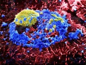 Новый вирус гриппа может убить жизнь на Земле