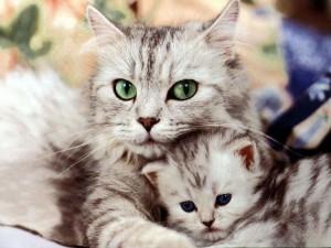 Мифы о домашних животных