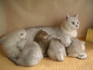 Влияние мурлыканья кошки на организм человека