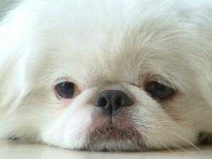 Взаимосвязь собаки и здоровья  человека