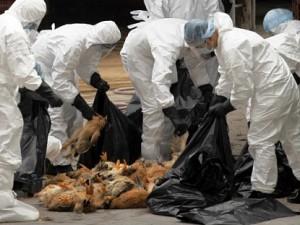 Россия ввела запрет на ввоз птицы из Мексики из-за вспышки птичьего гриппа