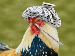 Низкопатогенный грипп птиц зарегистрирован в Амурской области