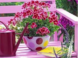 Цветы для лечения простуды