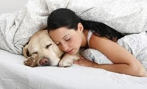 Болезни собак, которые являются опасными для человека