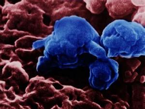 Ученые Китая заявили о существовании птичьего гриппа, передающегося от человека к человеку
