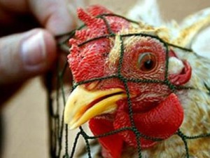Перенесшая «птичий грипп» женщина родила здорового ребенка в КНР