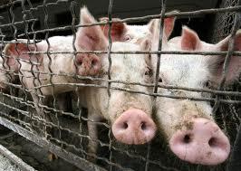 Россиян на «свиной грипп» проверят молодые избиратели