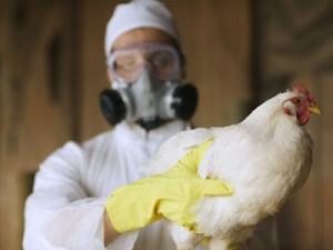 У китаянки, переболевшей «птичьим гриппом» родился здоровый ребенок