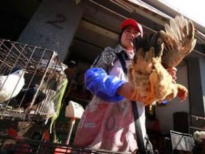 В Камбодже зафиксирована тяжелейшая вспышка птичьего гриппа