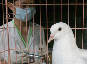 В ООН обеспокоены возможной эпидемией птичьего гриппа
