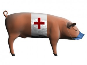 Он больше не свиной, а инфлюэнца A(H1N1).