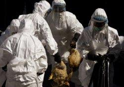 Грипп с чудовищной летальностью: 5 мутаций до пандемии