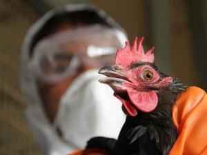 В Китае зарегистрирован первый случай заболевания гриппом, вызванного штаммом H5N6