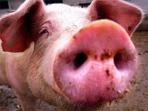 Случаи «свиного гриппа» выявлены в Самарской области