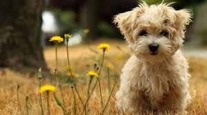 Самые распространенные болезни у собак