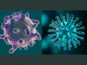 Японец создал в США из свиного гриппа абсолютный вирус-убийцу