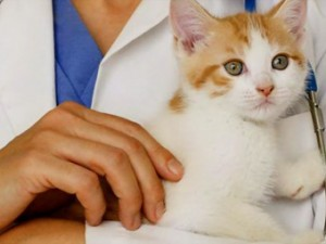 Вызов ветеринарного врача на дом