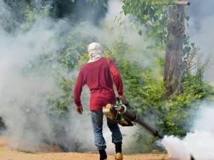 Число заболевших лихорадкой денге в Японии превысило 80 человек