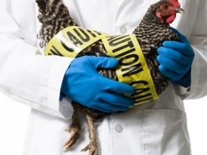 Птичий грипп приближается к границам ЕАО