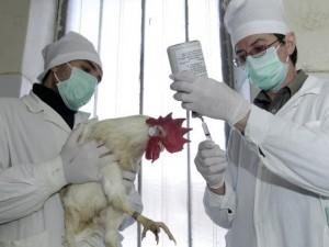 Сибирь усиливает меры безопасности из-за вспышки птичьего гриппа в КНР