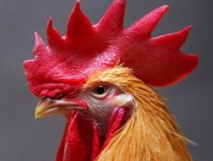 Азербайджану не грозит птичий грипп из Китая