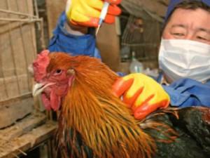 В России сохраняется угроза распространения гриппа птиц