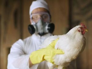 Птичий грипп в США — угроза рынку говядины