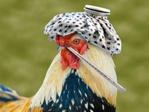 Магнитогорску угрожает птичий грипп