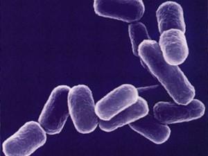 О профилактике вирусных кишечных инфекций