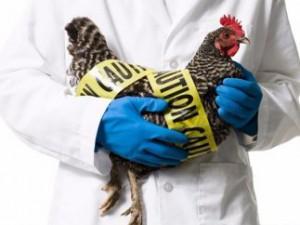 Птичий грипп заставил ввести ЧП в трех штатах США
