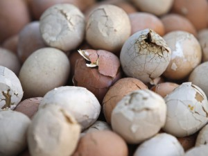 Птичий грипп отрицательно влияет на поставку куриных яиц из США