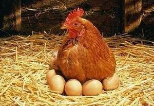 Россельхознадзор запретил ввоз птицы и яиц из США
