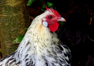 В Висконсине птичий грипп найден еще на двух фермах