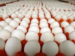 В Российской Федерации, возможно, запретят ввоз американских яиц