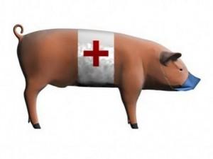 Семь жителей Крыма заболели свиным гриппом