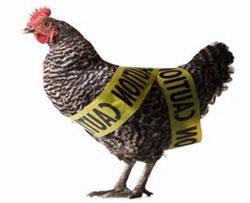 Нигерия сообщает о 54 вспышках высоко патогенного птичьего гриппа